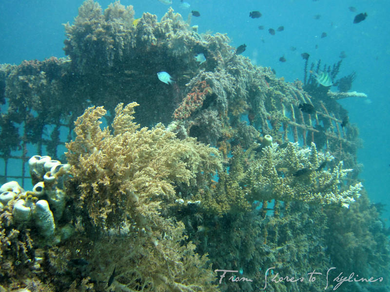 diving in pemuteran